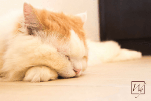 Pets gravitate toward the warmth of in-floor radiant heating.