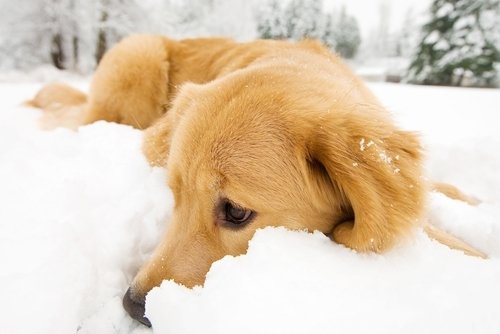 Salt and other chemical snow-melting substances can be harmful to animals