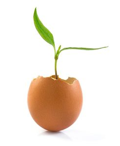 New life as plant emerges from egg