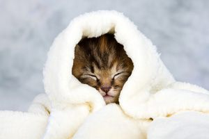 Pets enjoy heated blankets, which can be warmed up on an electric towel rack.