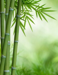 Bamboo plant in its natural habitat